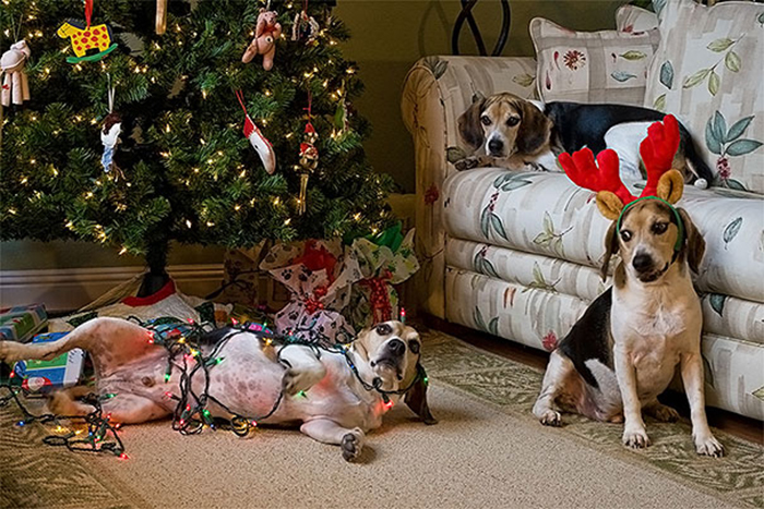 dogs and cats destroying christmas helpers