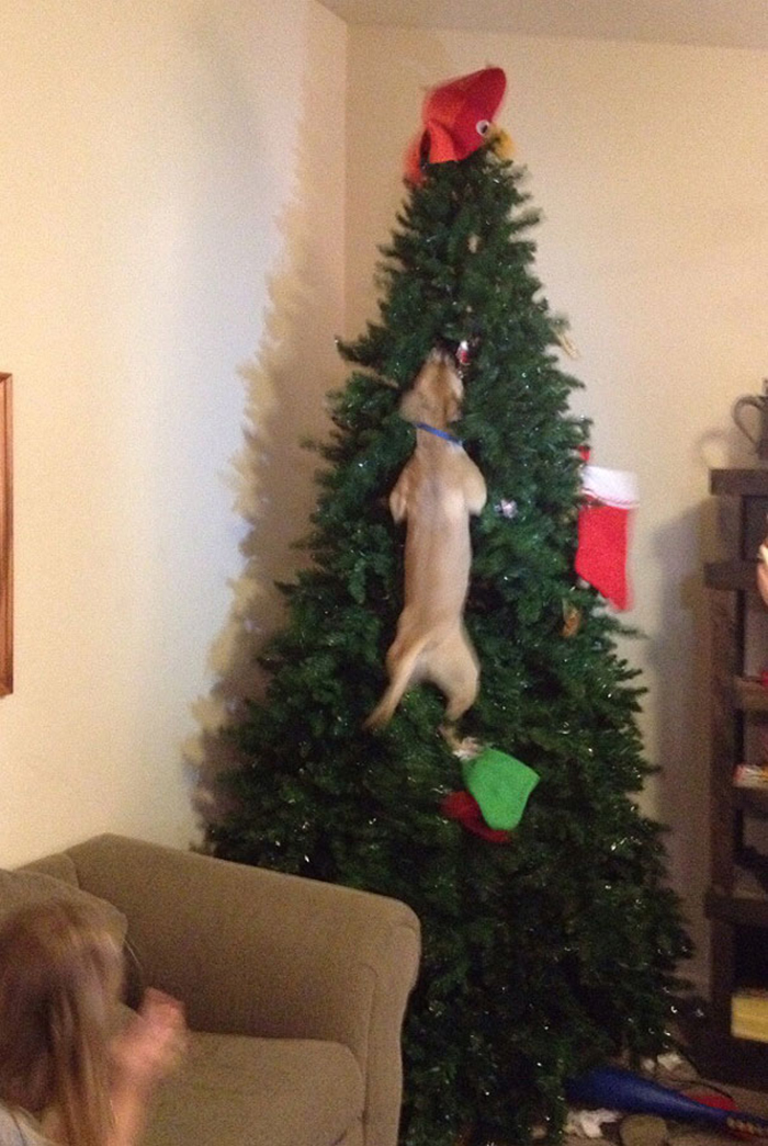 dogs and cats destroying christmas jumping in tree