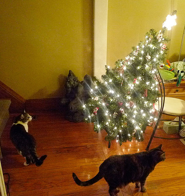 dogs and cats destroying christmas pretend