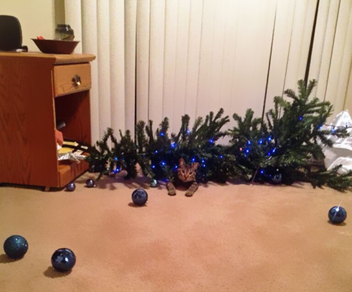 dogs and cats destroying christmas tree down