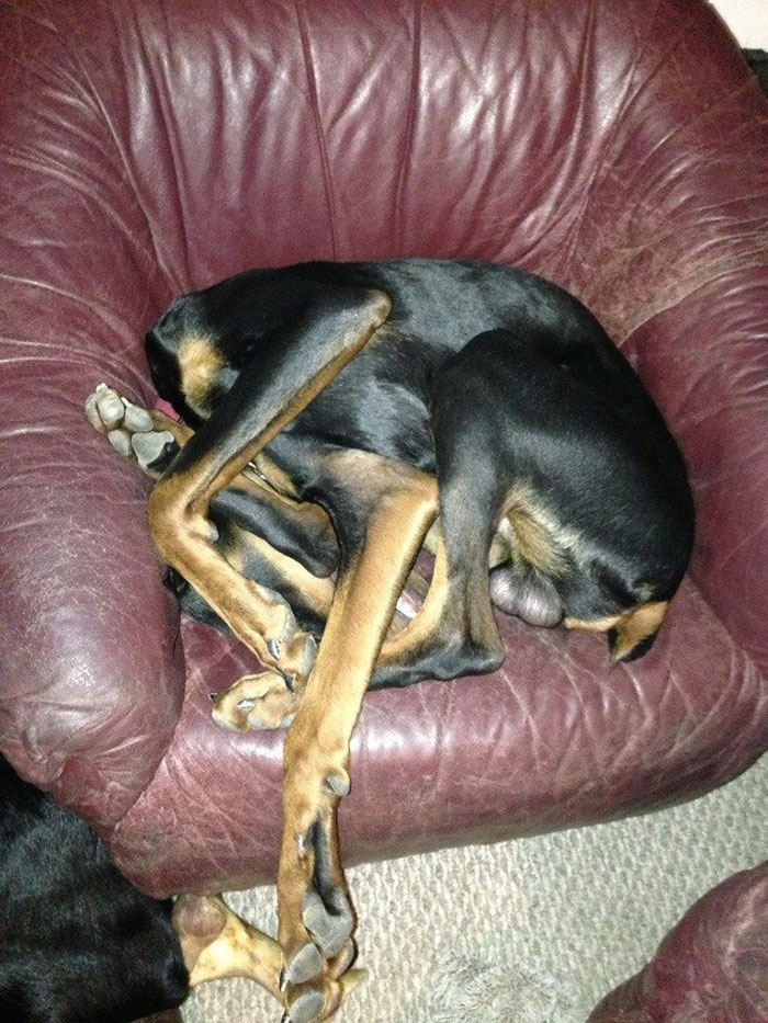 funny dog sleeping positions contortionist