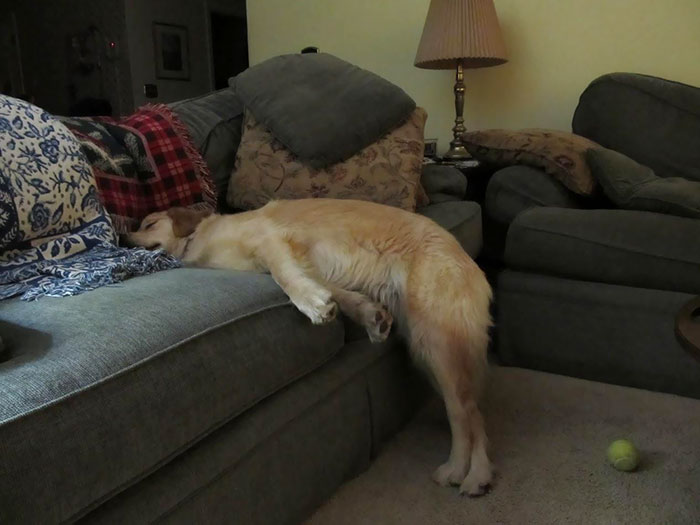 funny dog sleeping positions couch
