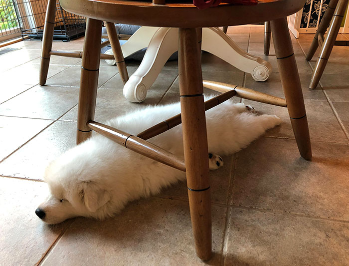 funny dog sleeping positions under chairs