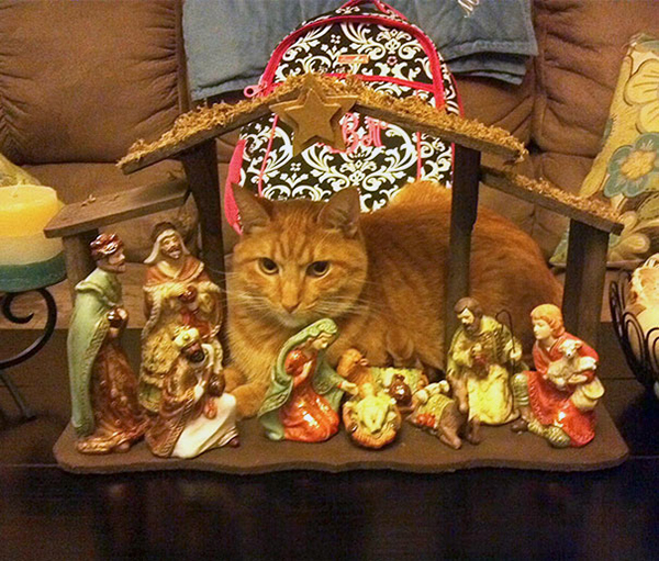 he brought gold, frankincense, and purr