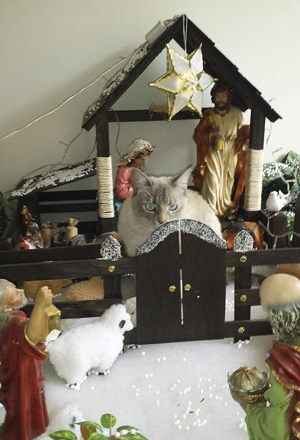 huge sheep in the nativity scene