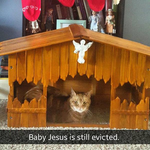 landlord kitty