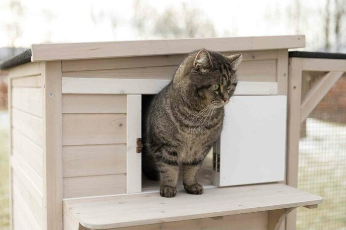 luxurious multi-level condo for feline pets