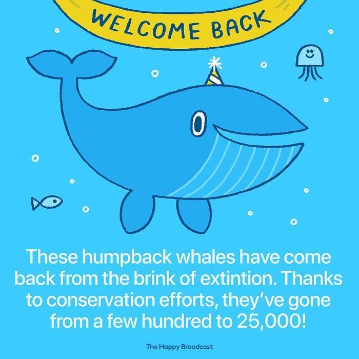 mauro gatti illustrations humpback whales