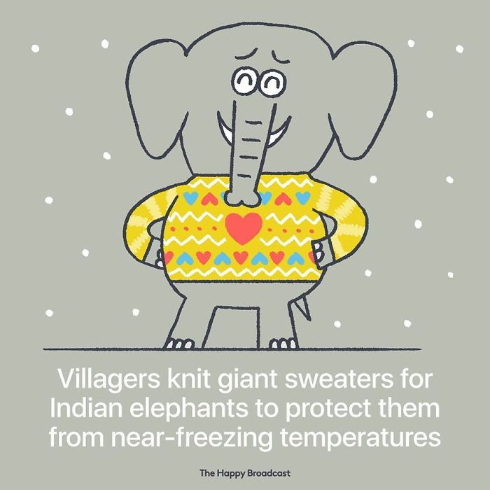 mauro gatti illustrations knit giant sweaters for elephants
