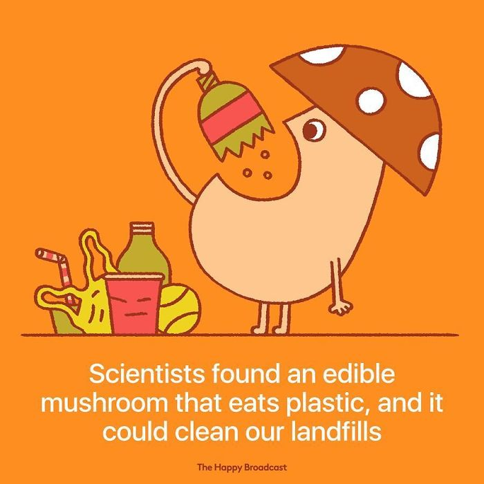 mauro gatti illustrations plastic eating mushrooms