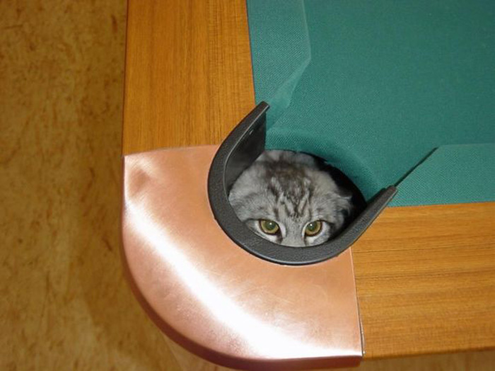 ninja cats billiard hole