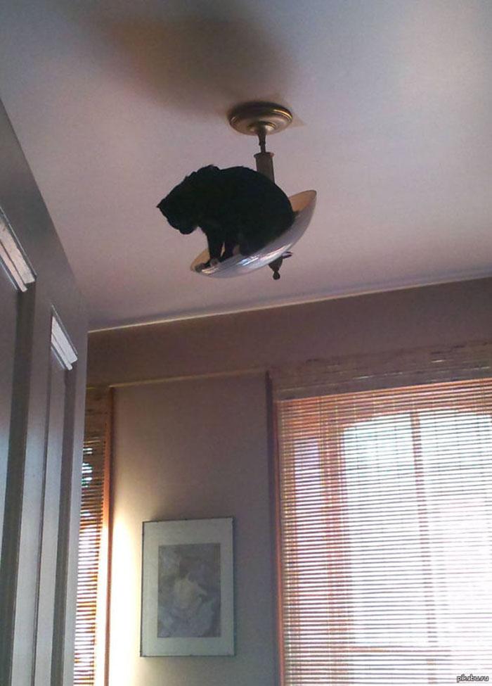 ninja cats chandelier