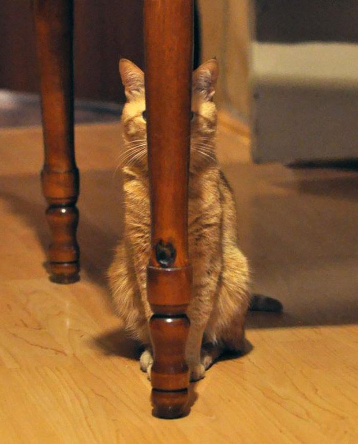 ninja cats clever hiding