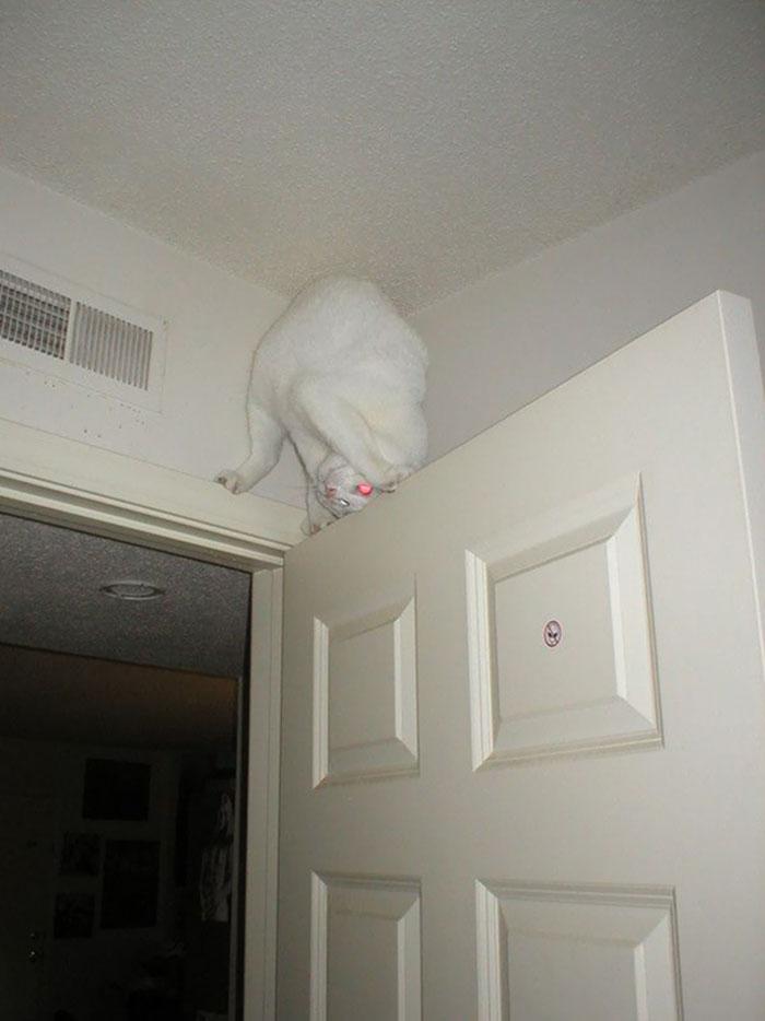 ninja cats flexible