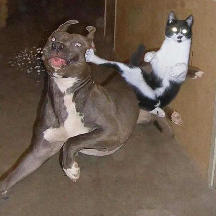 ninja cats flying kick