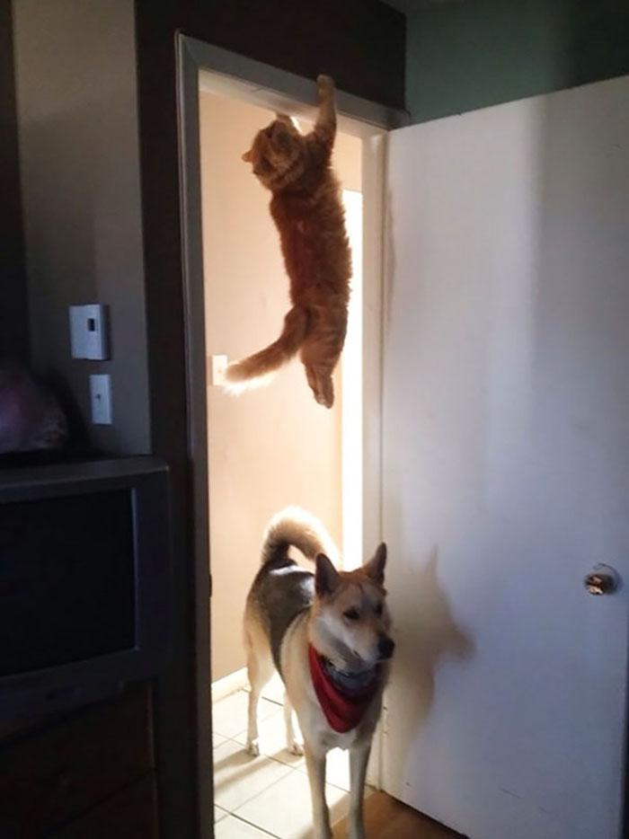 ninja cats hanging door