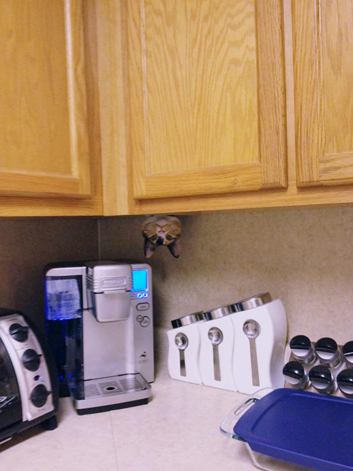 ninja cats kitchen