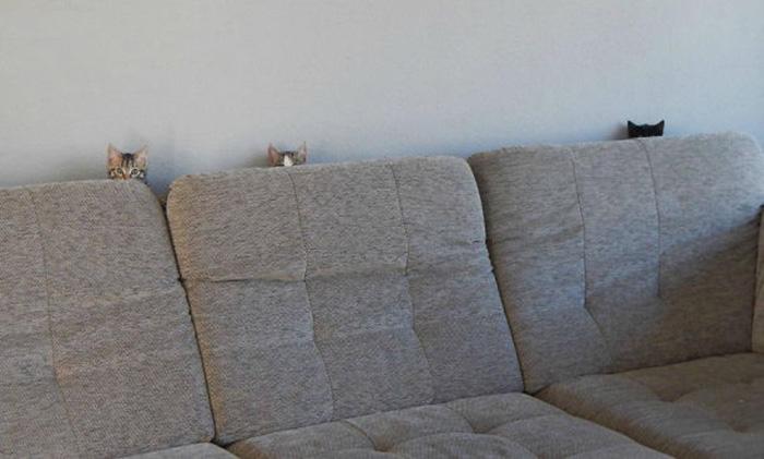 ninja cats sofa hiding