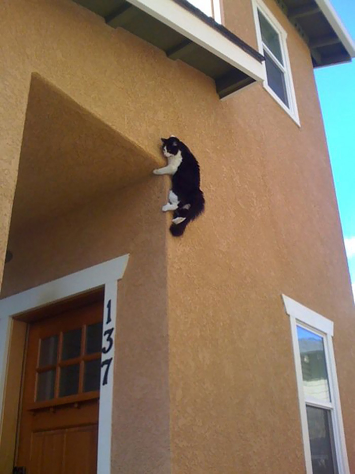ninja cats wall cling