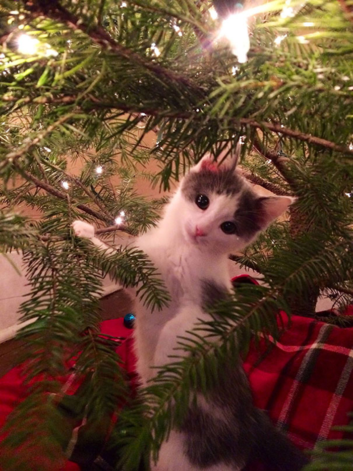 pets destroying christmas kitten tree