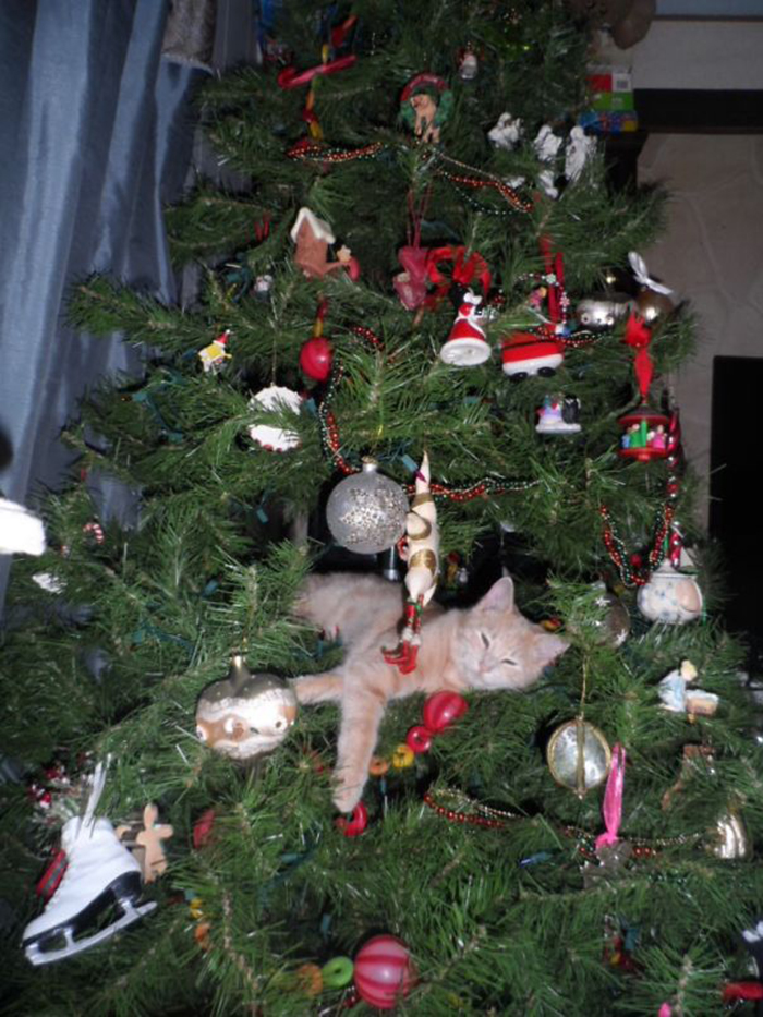 pets destroying christmas kitty ornament