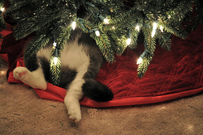 pets destroying christmas kitty under tree