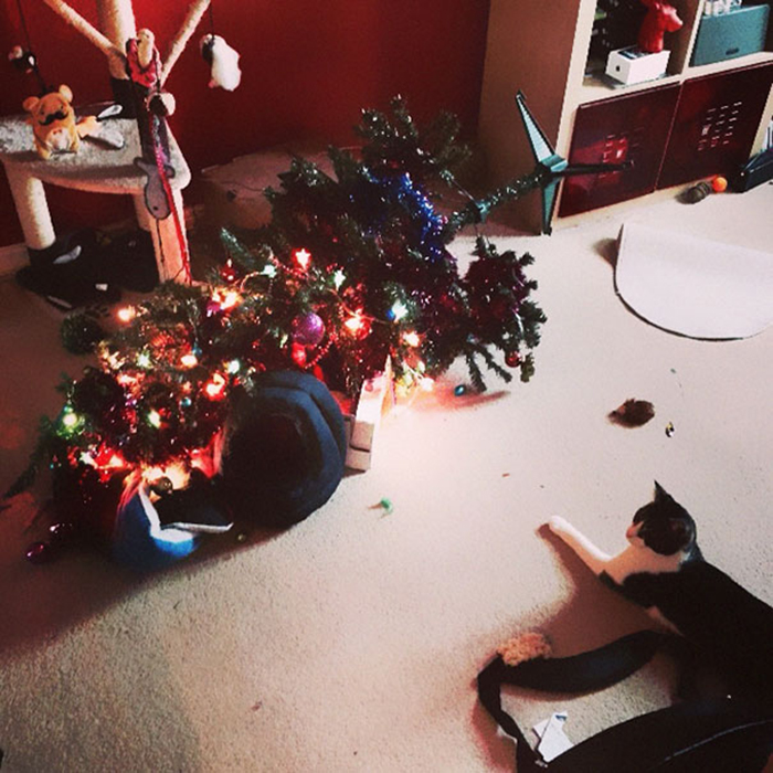 pets destroying christmas kitty wins