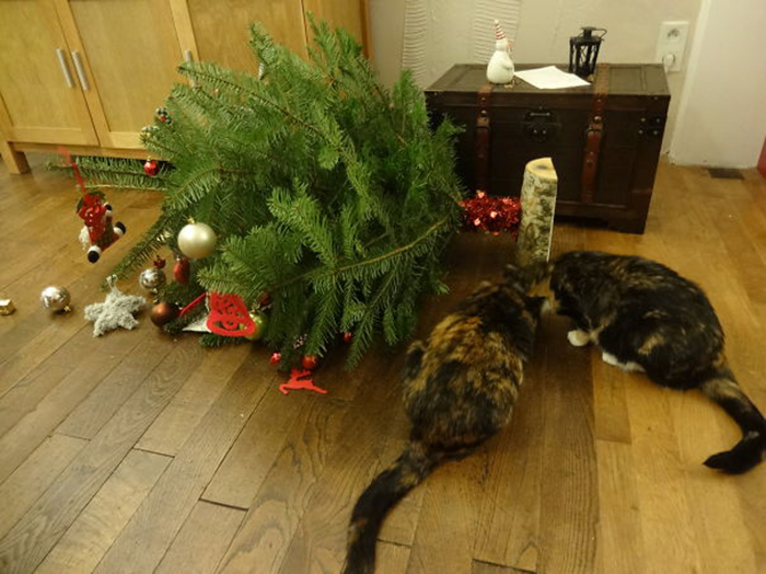 pets destroying christmas tree down