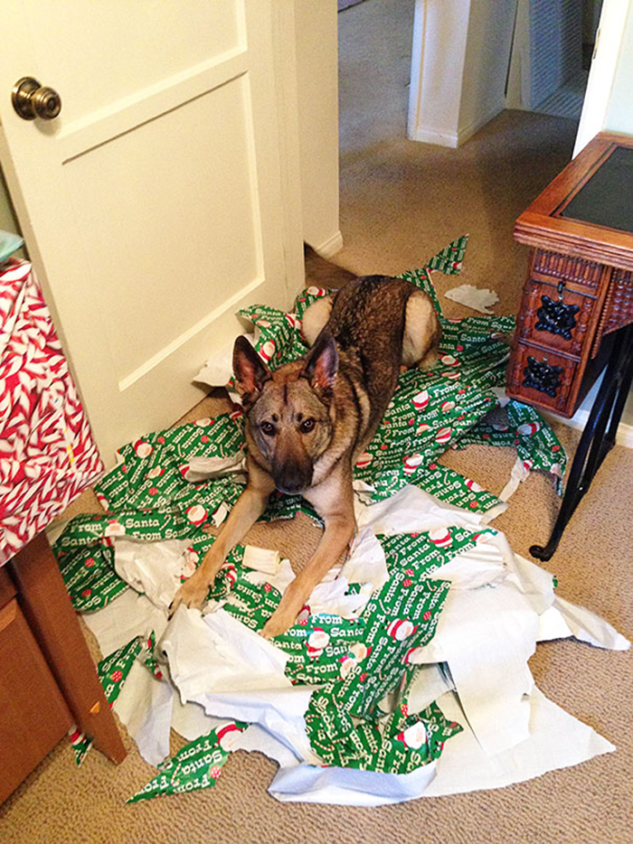 pets destroying christmas unwrapping presents