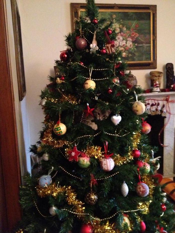 sneaky hiding kitty christmas tree
