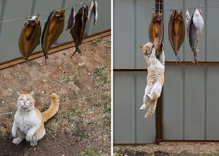 sneaky hiding kitty fish thief