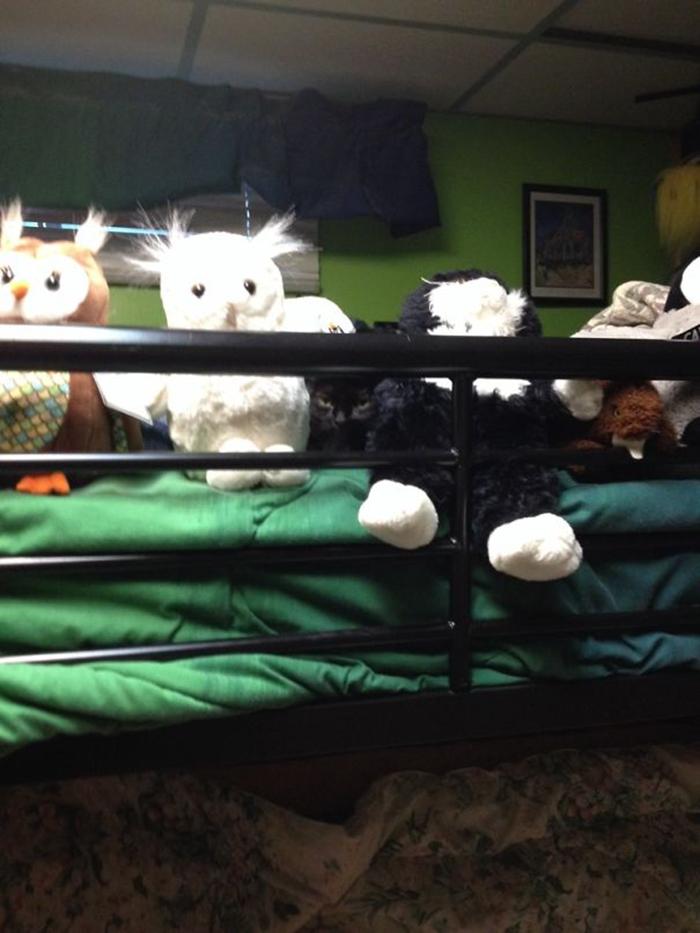 sneaky hiding kitty stuffed toys