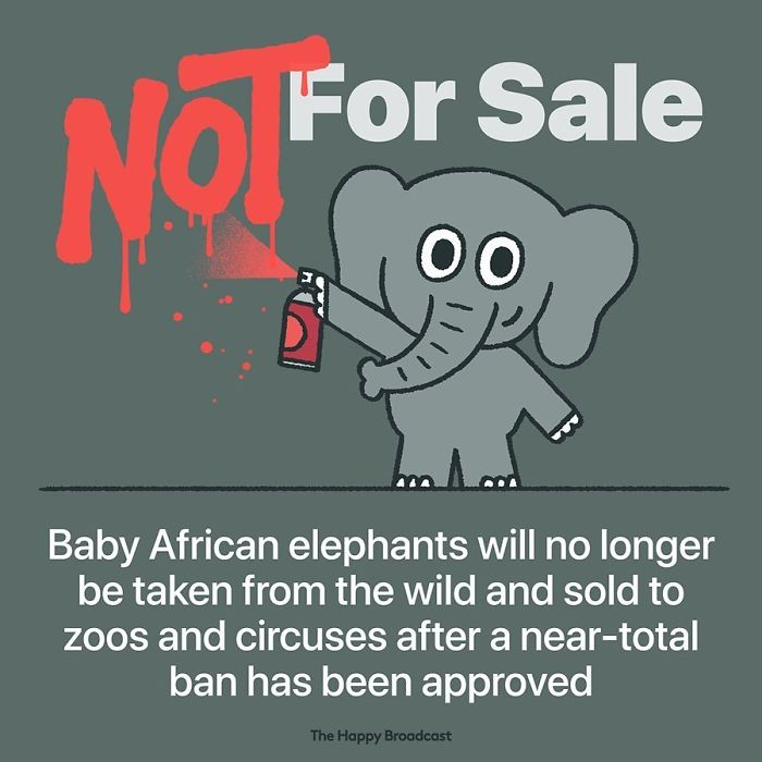the happy broadcast baby elephants not for sale
