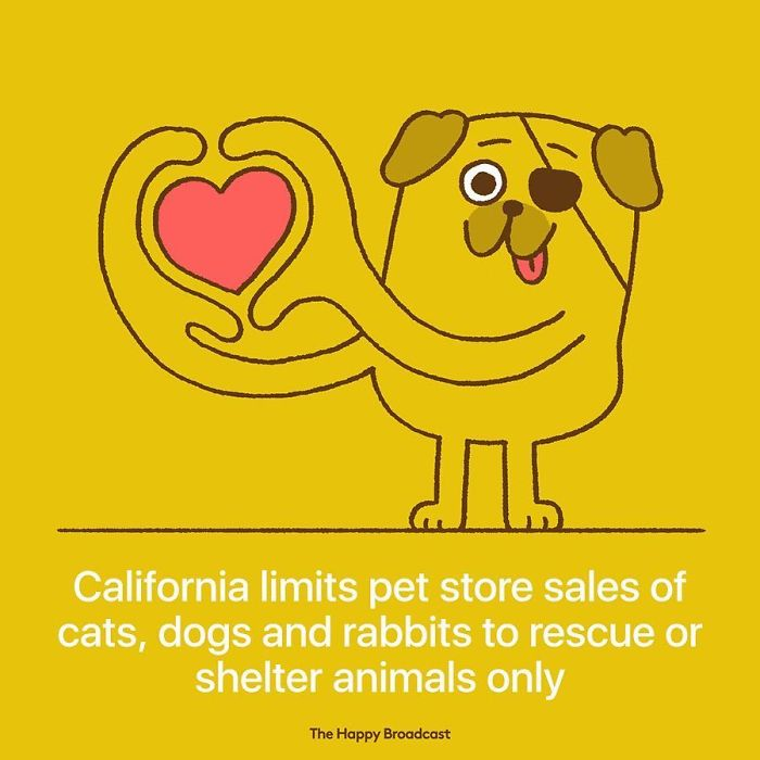 the happy broadcast california shelter dogs