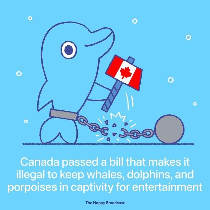 the happy broadcast canada bans dolphin captivity