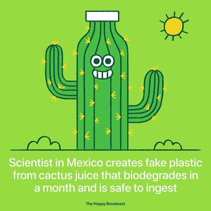 the happy broadcast mexico fake plastic cactus juice