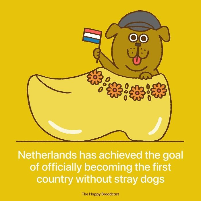 the happy broadcast netherlands country without stray dogs
