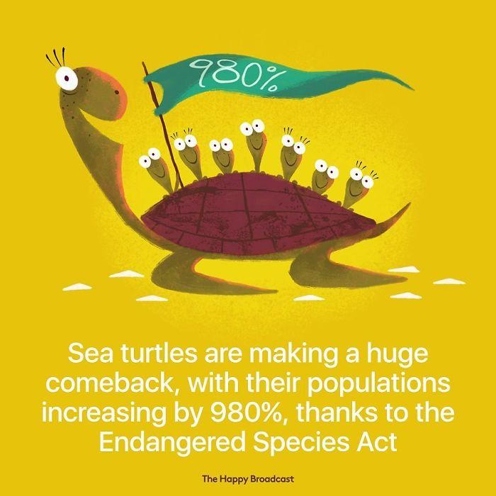 the happy broadcast sea turtles population
