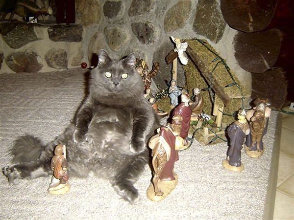 there was a cat in the manger with baby jesus