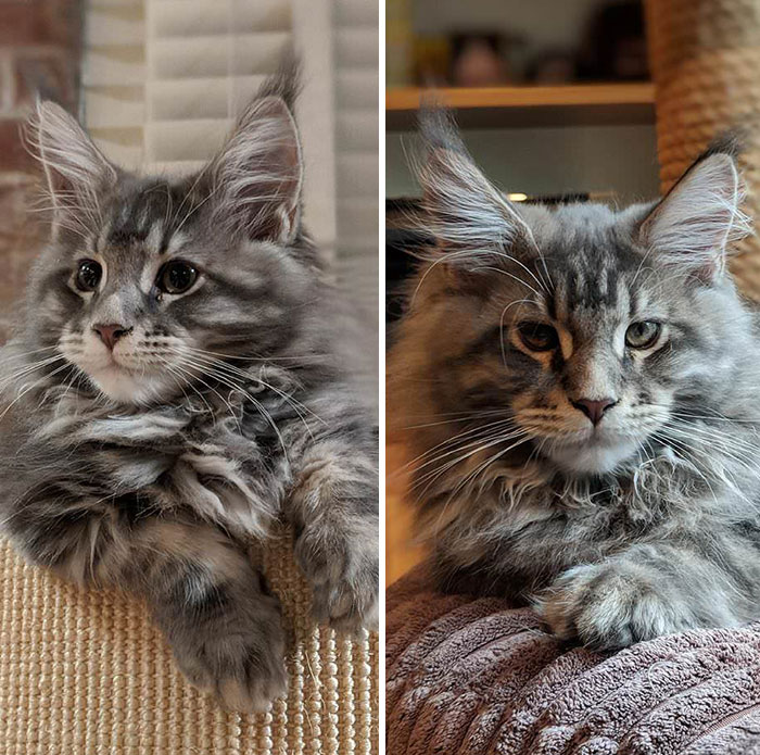 13-week-old Kitten VS 14-week-old Kitten