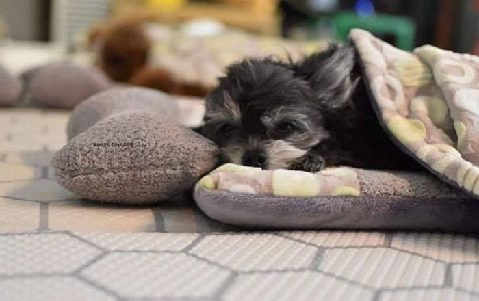 Black Puppy on a Dog Bed
