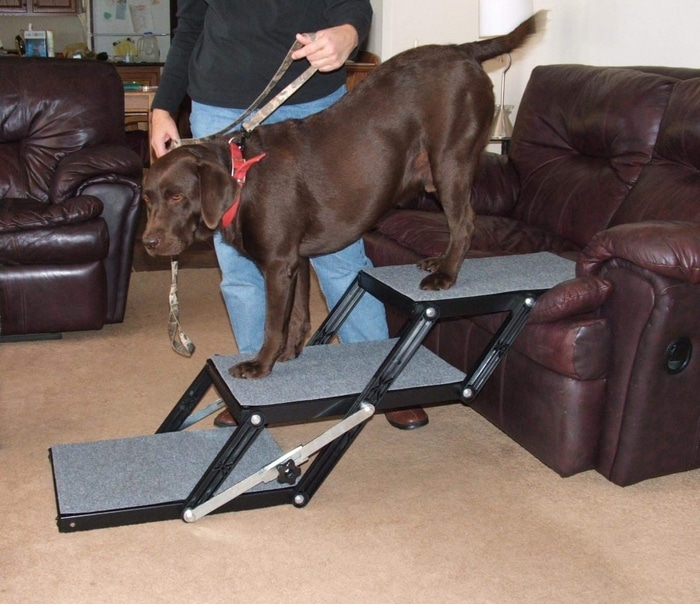 Brown Dog Getting Off a Couch through 3-step Foldable Dog Stairs