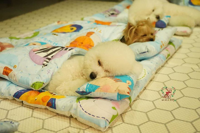 Cute Puppies Taking a Nap 2