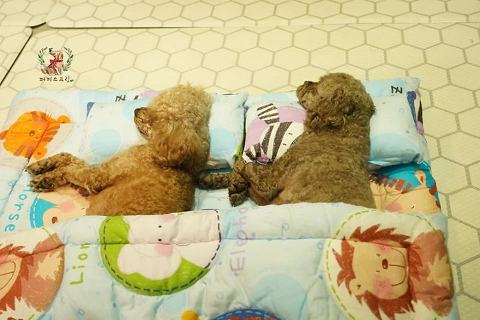 Cute Puppies Taking a Nap