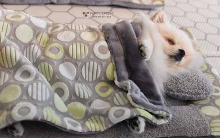 Cute Puppy Taking a Nap 1