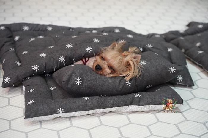 Cute Puppy Taking a Nap 2
