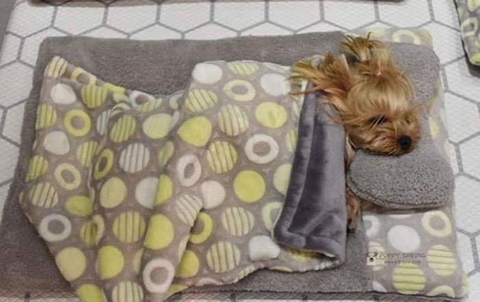 Cute Puppy Taking a Nap 3