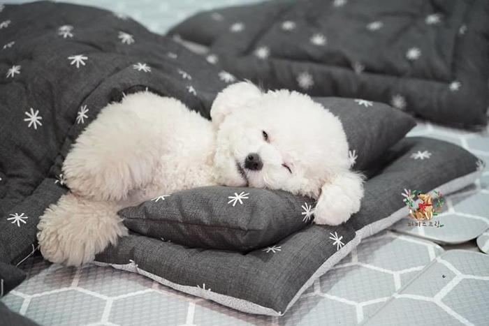 Cute Puppy Taking a Nap 4