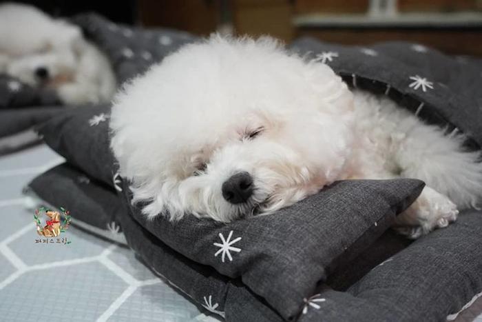 Cute Puppy Taking a Nap 6