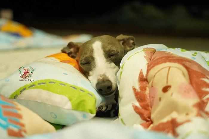Cute Puppy Taking a Nap 7